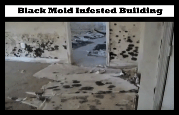 Habitat Of Black Mold