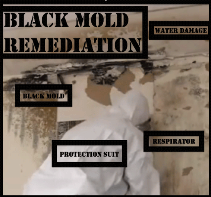 how to get rid of mold on walls before painting