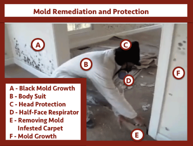 mold remediation and protection