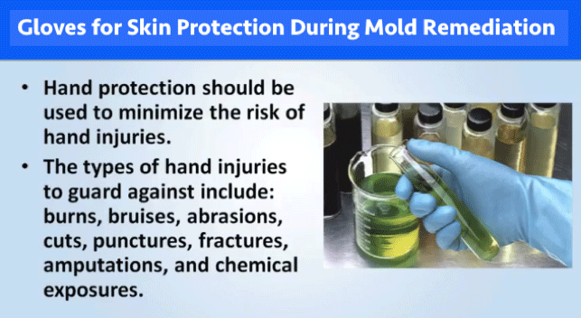 Gloves for Skin Protection During Mold Remediation