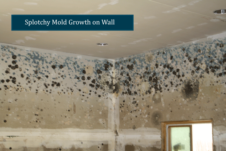 Splotchy Mold Growth on Wall