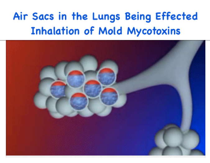 mycotoxins affecting air sacs in lungs