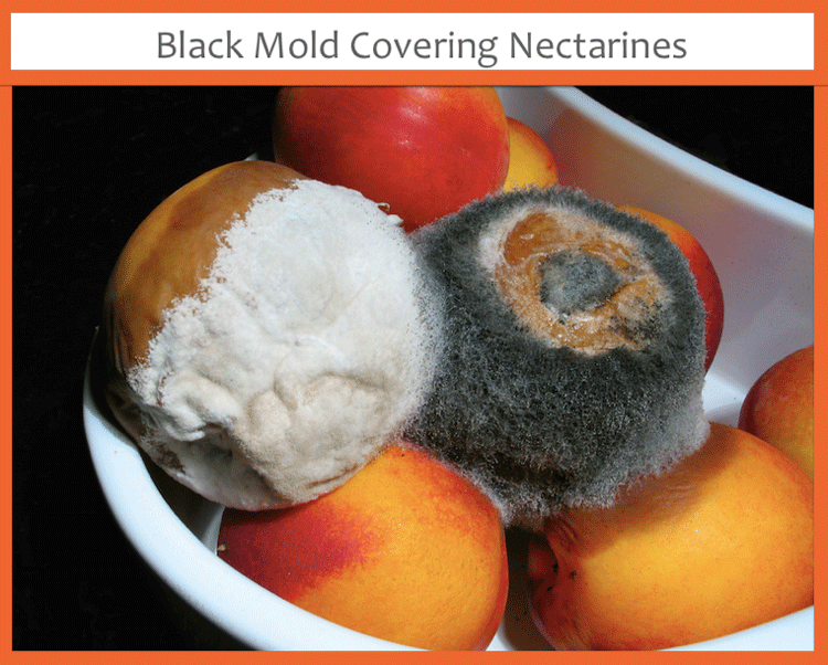 black mold nectarines