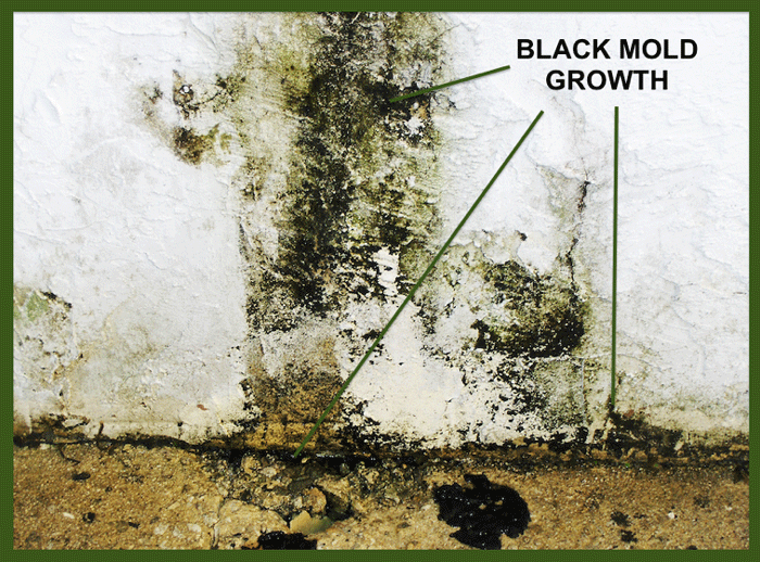 What Is Black Mold